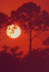 Round ball of sun in red sunset behind trees, photograph by Brent VanFossen, Oklahoma