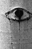 Photo of an eye shape in Aspen tree bark