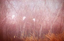 Egrets in Fog by Brent VanFossen. Even fog brings damp and cold to your equipment.