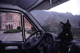 dahni, the traveling blind kitty, rests on the dashboard of our rented motorhome in spain