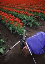 Duane Hansen gets down and dirty in the tulips. By inverting the center post of the tripod, the photographer can get right down on the ground for a different perspective or close-up work. 