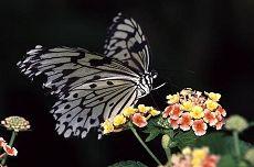 Butterfly, photo by Brent VanFossen