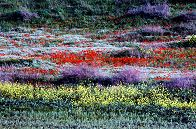 Spring brings fields of wildflowers bursting out in Northern Israel, photo by Lorelle VanFossen
