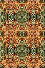 Cactus image duplicated 16 times to create a quilted effect