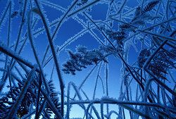 By changing positions and perspectives, looking up through the frost-covered grasses gives a new view.