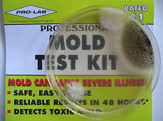 Mold Test Kit shows positive for mold, photograph by Lorelle VanFossen