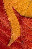 Three leaves overlap, photograph by Brent VanFossen