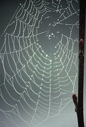 A web forms an Archimedes spiral, photograph by Brent VanFossen