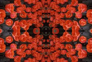 Red Tulips PhotoQuilt III, photo by Brent VanFossen