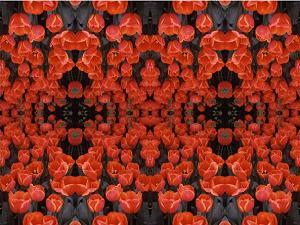 Red Tulips PhotoQuilt IV, photo by Brent VanFossen
