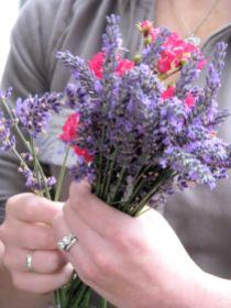 lavender festival 2009 (29)