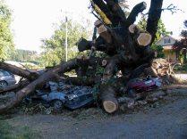 tree crushes cars gaston school 2 2007 lorelle vanfossen