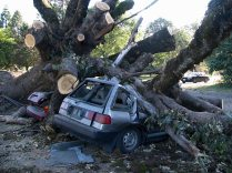 tree crushes cars gaston school 3 2007 lorelle vanfossen