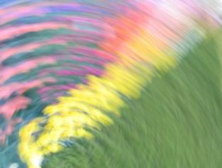 tulip blur circles 10 lorelle vanfossen