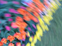 tulip blur circles 15 lorelle vanfossen