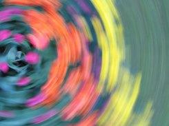 tulip blur circles 18 lorelle vanfossen