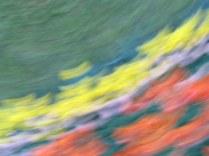 tulip blur circles 5 lorelle vanfossen