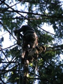 DJ in tree as tree climber grabs him - by Lorelle VanFossen