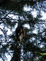 dj tree - climber cat in bag finally