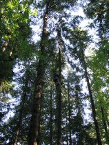 dj tree - climber up 4