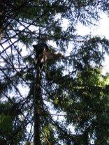 dj tree - swing in the bag