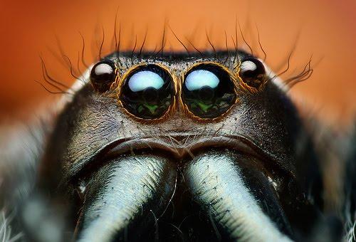 SpiderModelingReference_07