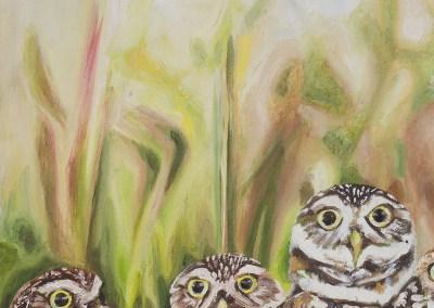 2016-05 - Art Bark - Burrowing Owls - Original Painting by Cameron Dixon - detail-c