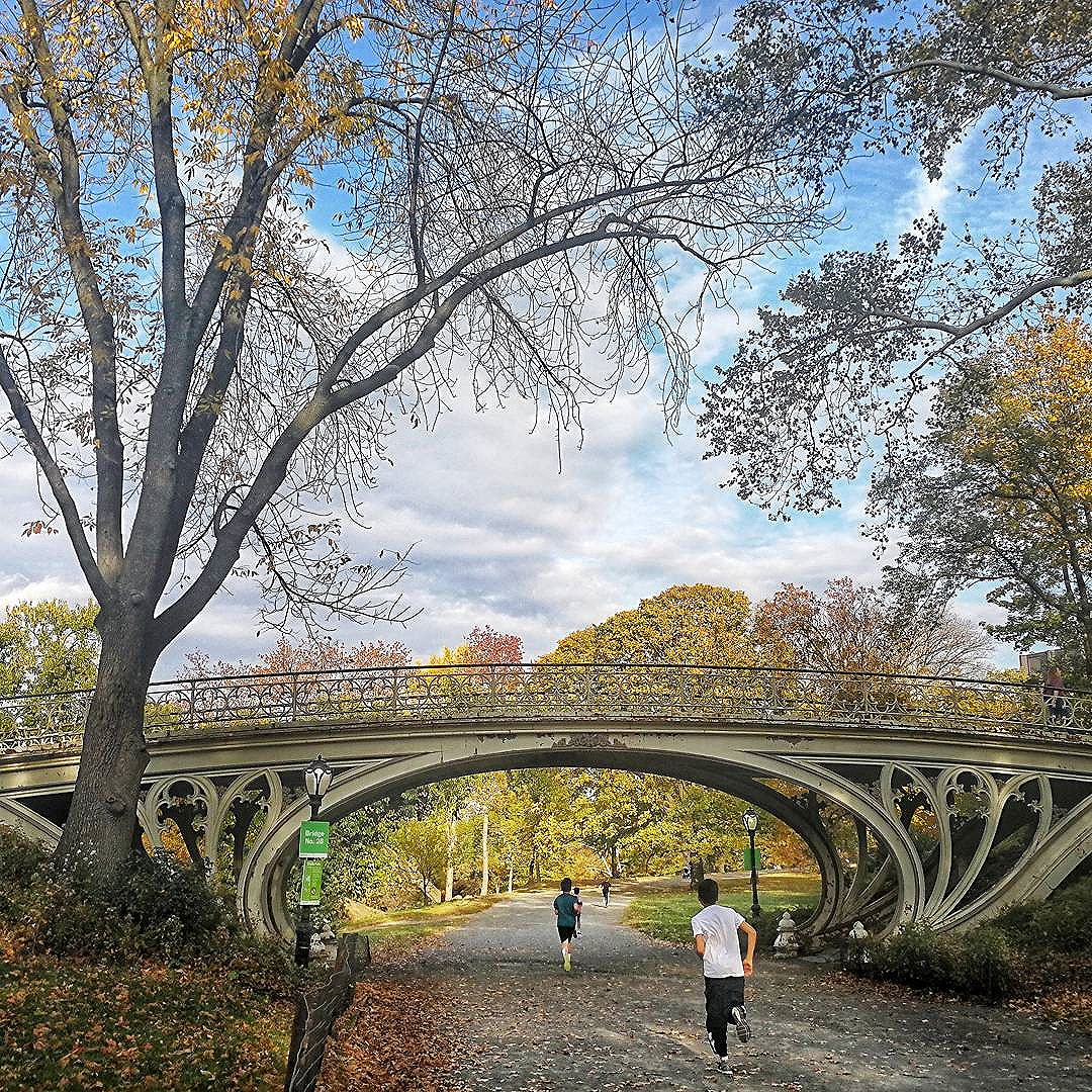 Photo - Central Park Bridge. Taken on a beautiful, warm day in November.