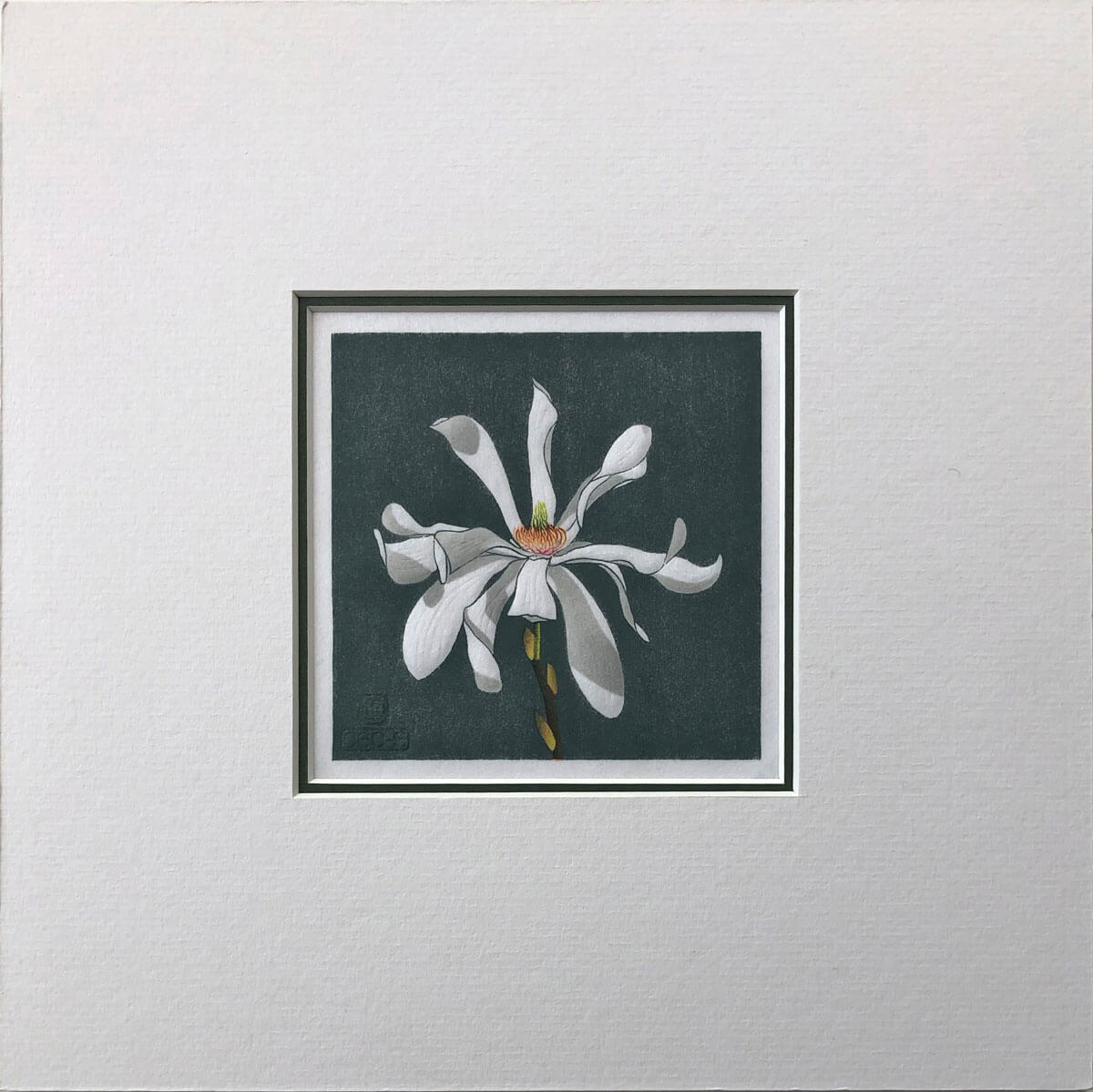 Magnolia Stellata woodblock print mounted by Claire Cameron-Smith