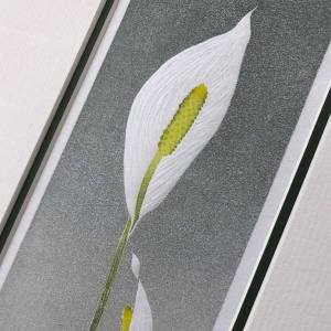 handmade linocut print of a peace lily plant with two white blooms with green leaves against a graded grey background