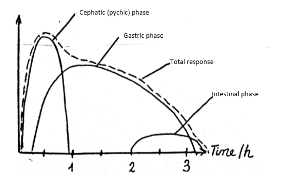 phase of gastric secretion related to acid output