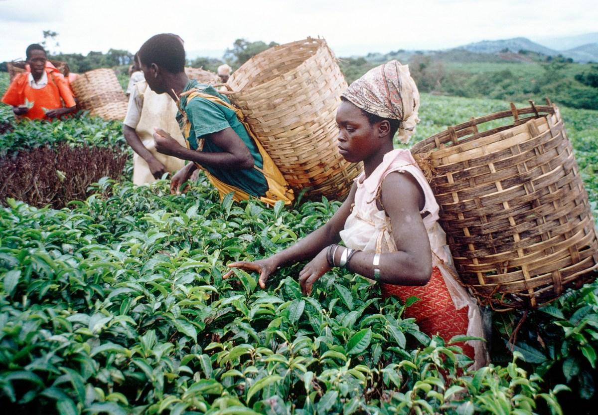 Top 10 des emplois les mieux payés en Afrique