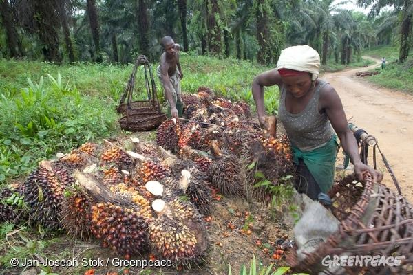 Cameroun : Greenpeace exige l'annulation du projet Camvert  avant la Cop 26