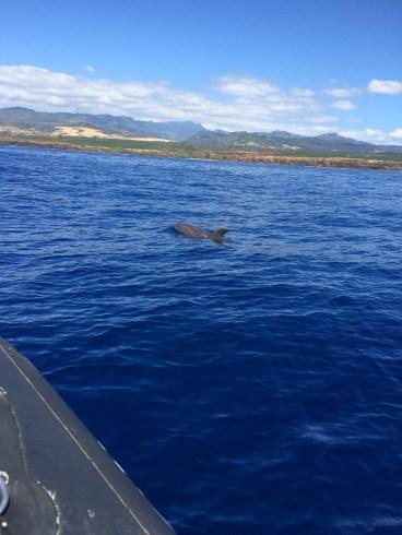 near a dolphin.