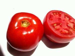 Tomatoes June 21 2016