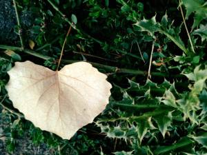 Love Floats Heart Shaped Leaf November 2017