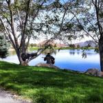 Tree Cut Down Vintage Lake 2017 #10