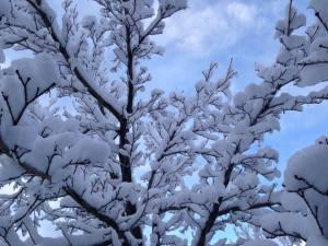 Frosty Embrace - Nature's Abundance 3.9.18