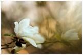 Kommer med våren
