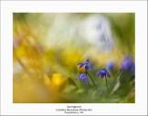 2015_03_22_0066825-Springtime