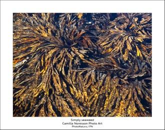 Simply seaweed