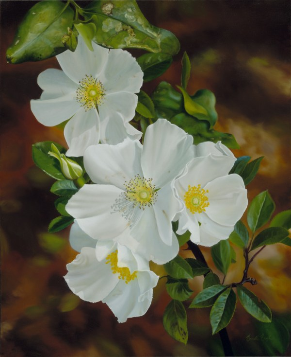 Cherokee Meaning Of Rose - Year of Clean Water