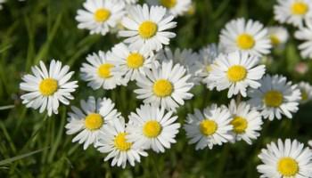 quelques fleurs