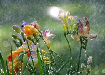 fleurs-pluie-0x0
