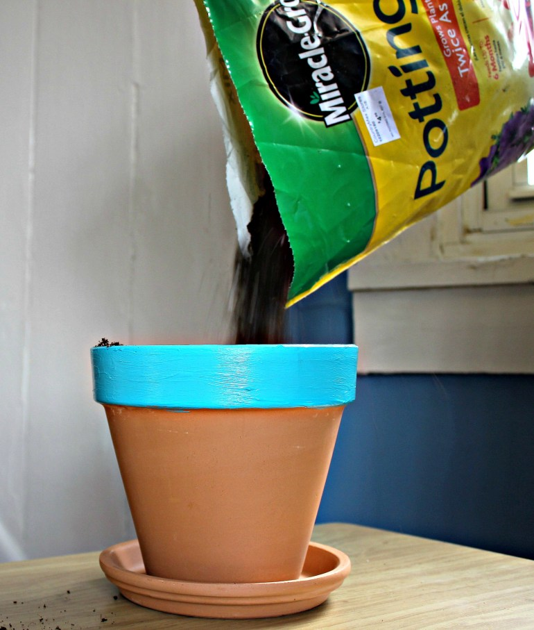 Pouring dirt into pot
