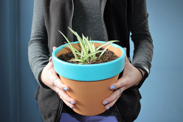 Finished product - spider plant in pot