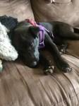 Meet Mila | Puppy Update
