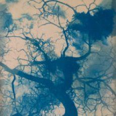 imagen enlace al portafolio de la serie de fotografía química experimental de paisajes sobre tela