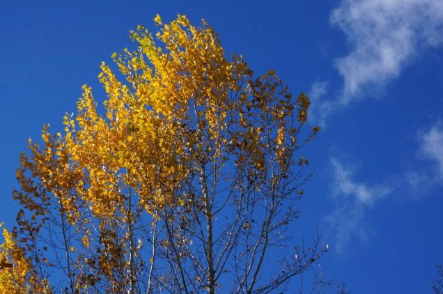 ultimas-hojas