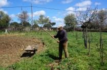 Cavando el huerto